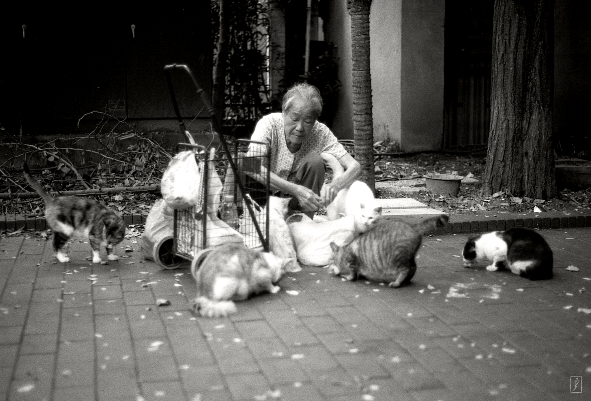 Zhongshan park (中山公园): An old woman with the group of cats she regularly feeds.