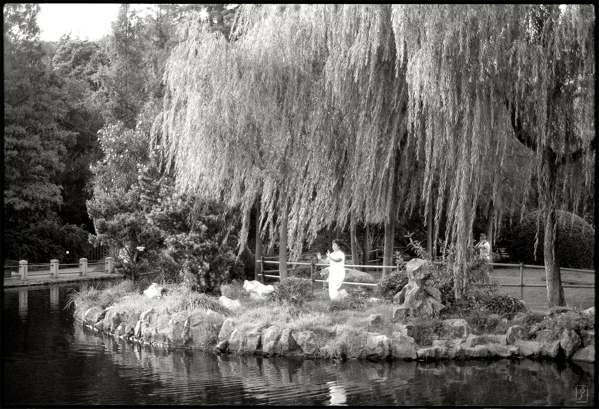 Lu Xun park (鲁迅公园): Taiji practice.