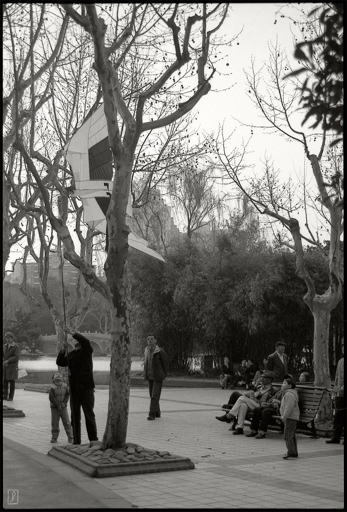 Yangpu park (杨浦公园): Getting a kite down from a tree.
